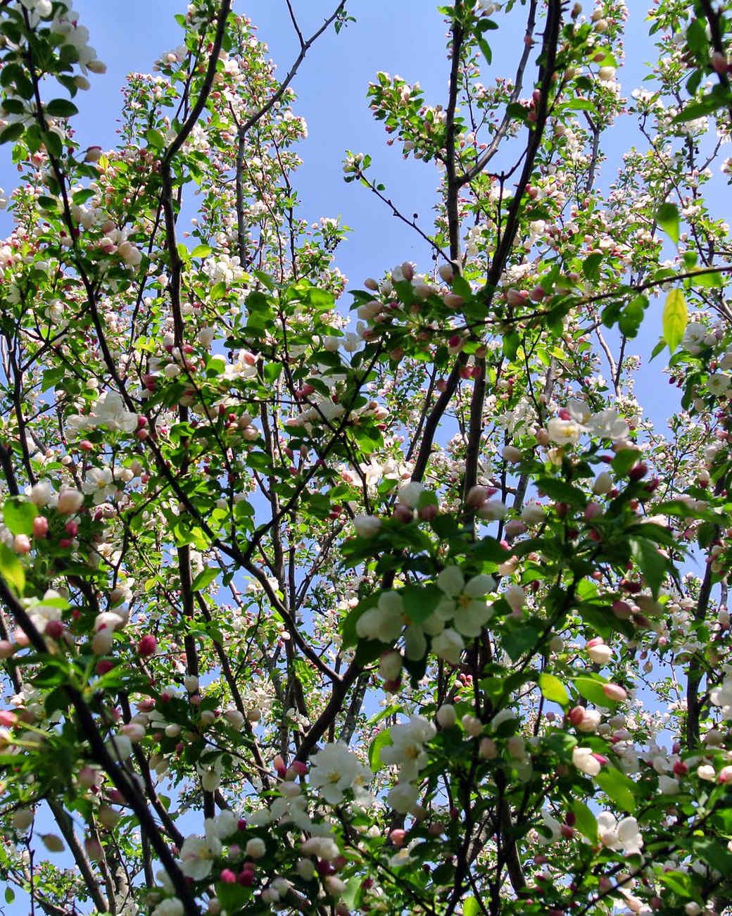 spring-slide-11_0515.jpg