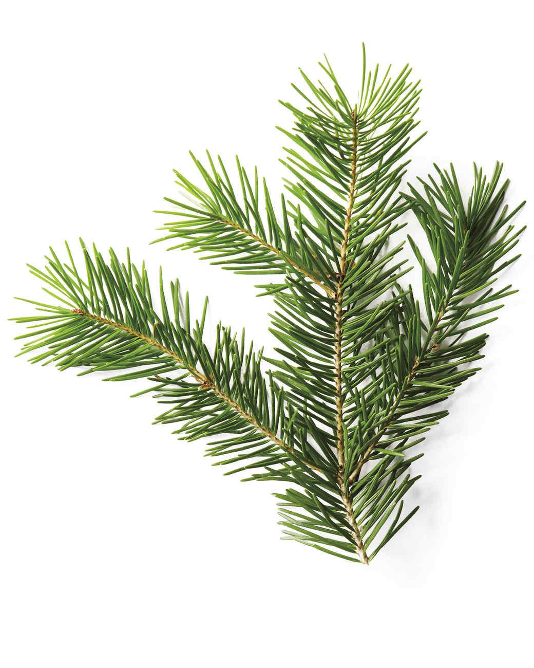 Branch Christmas Tree a christmas tree glossary | martha stewart