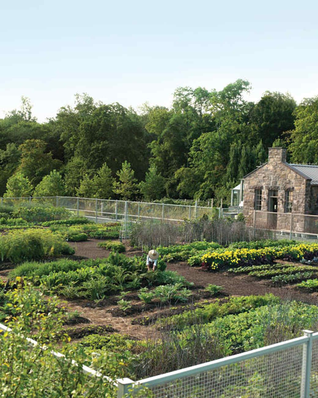 Cantitoe Corners: Martha's Vegetable Garden