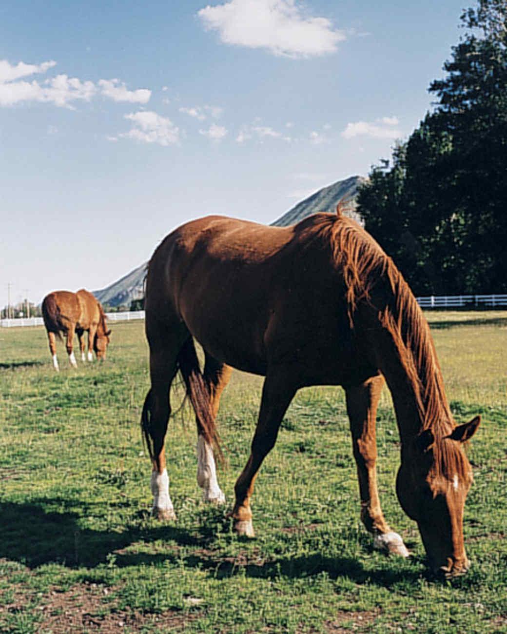 mlw854z03_sum98_horse.jpg