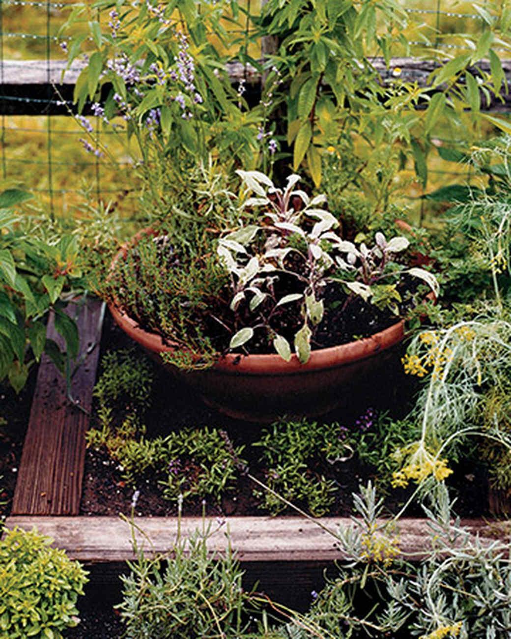 Vegetable Garden Glossary Martha Stewart