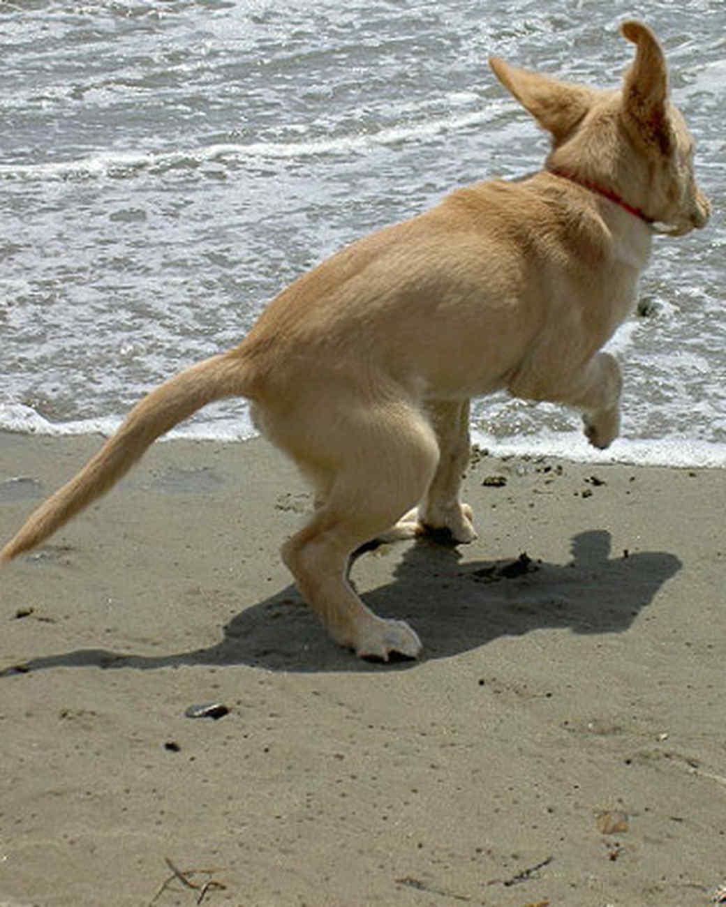 pets_beach_ori00096621.jpg