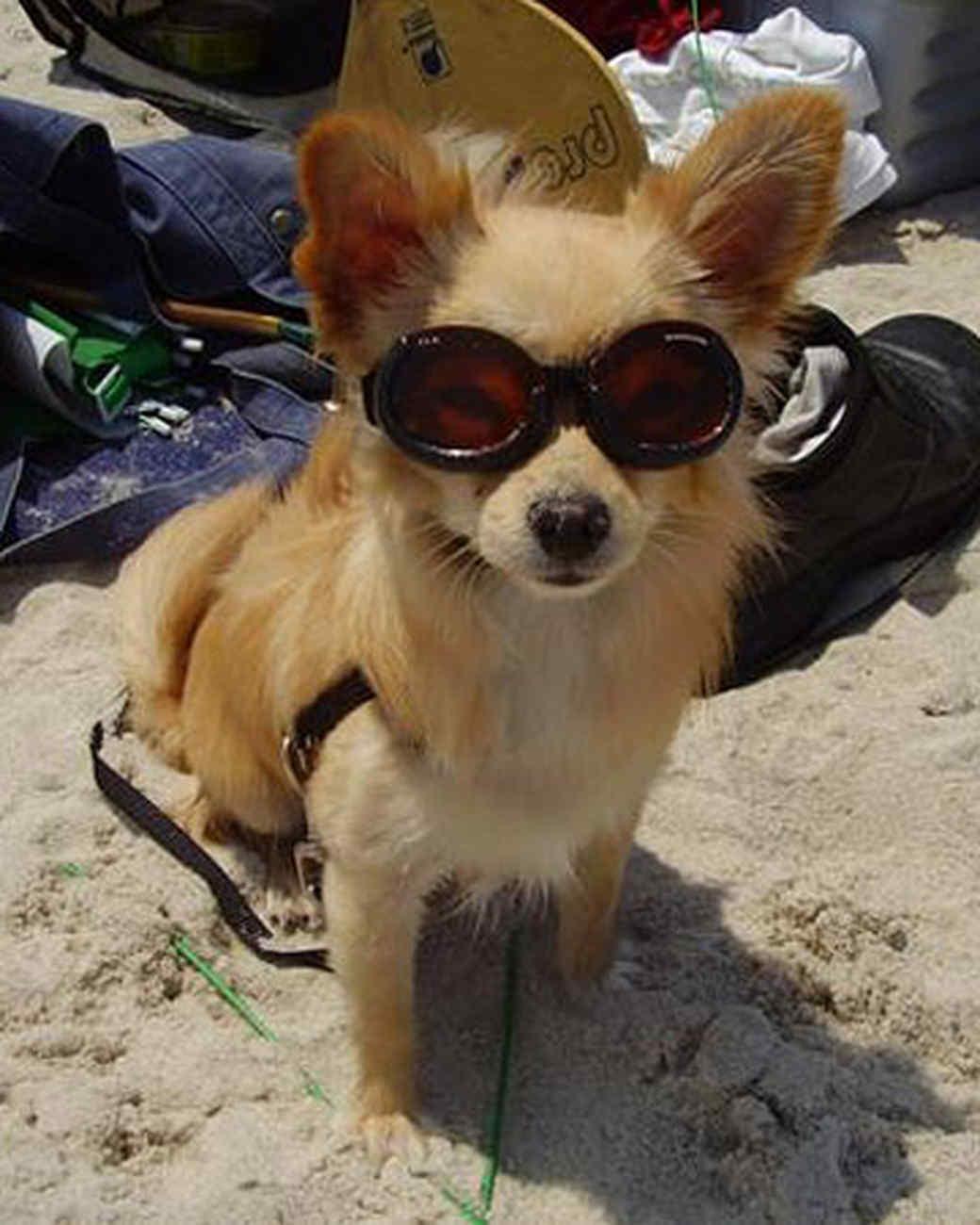 pets_beach_ori00096762.jpg