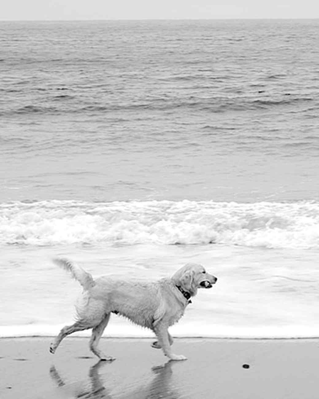 pets_beach_ori00096784.jpg