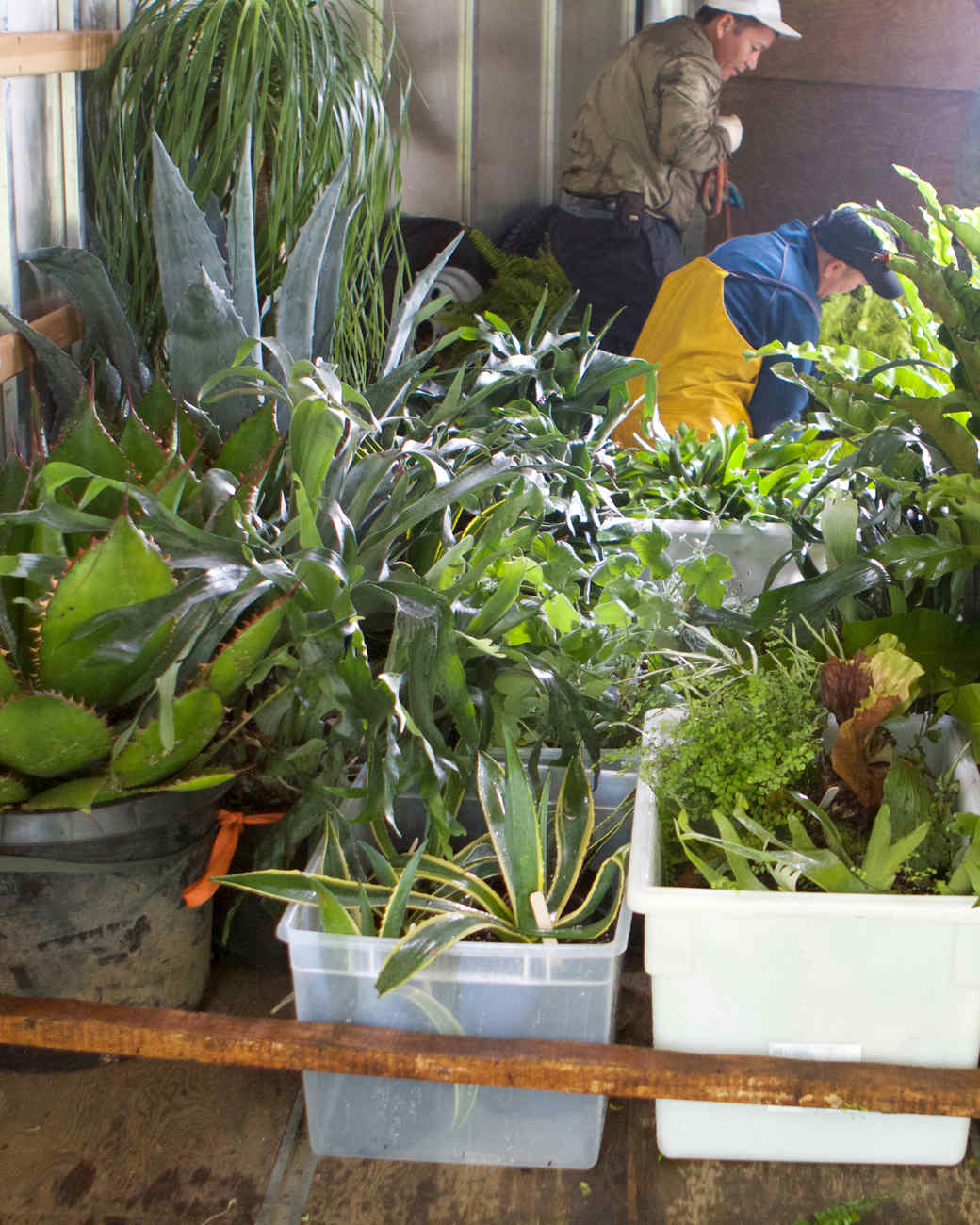 plants-to-main-17-0614.jpg