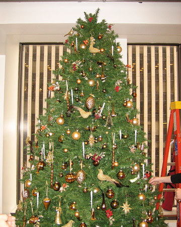 radio_1208_tree_trim_9.jpg