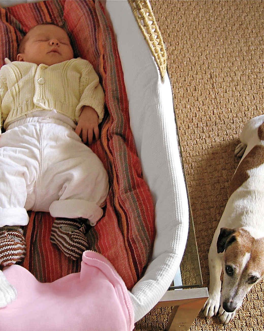 sleeping-baby-dog-0146.jpg