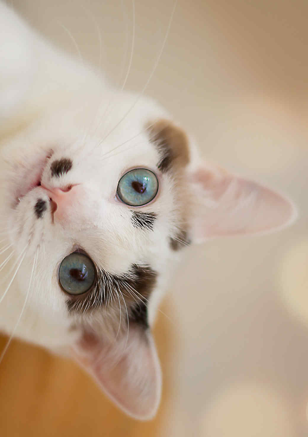 """8 Surprising Ways Your Cat Says """"I Love You"""""""