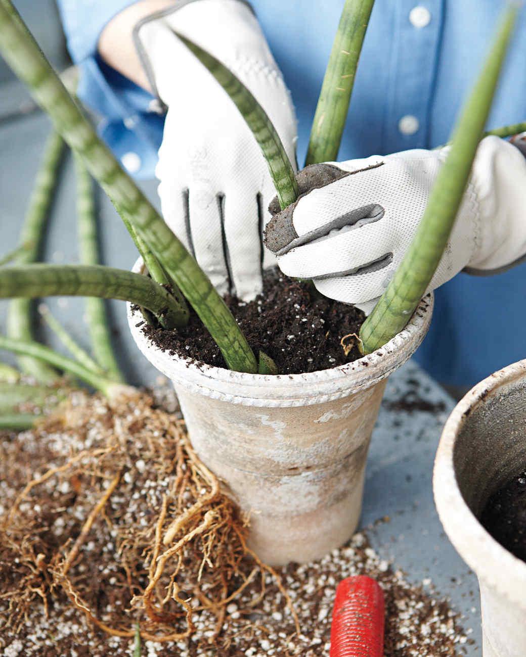 dividing-plants-3-mshot.jpg