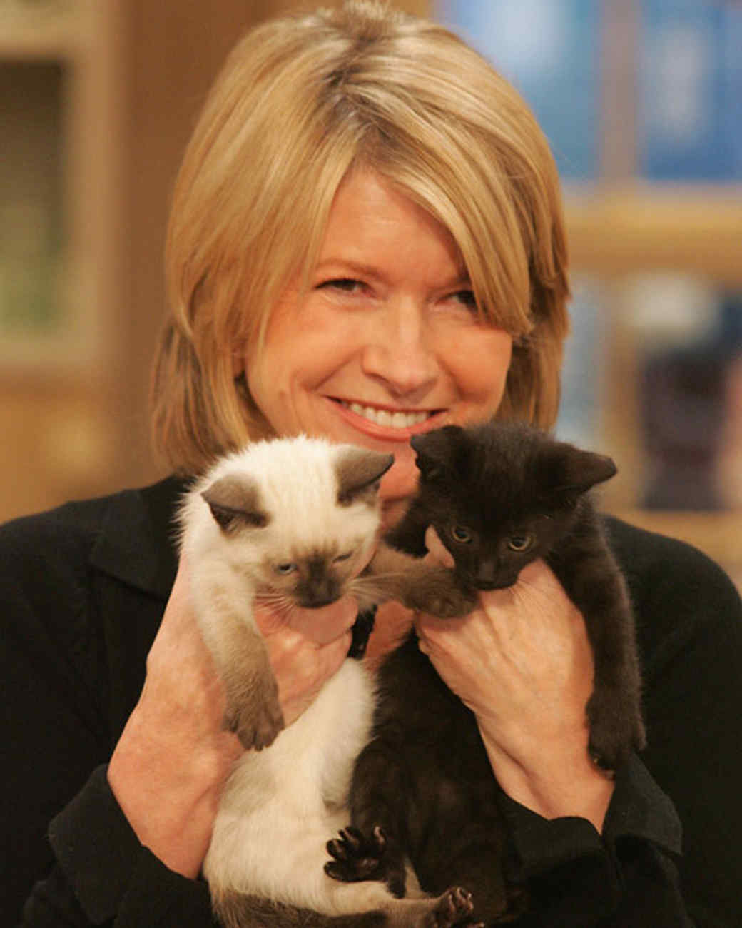 pe_cats_tvm1024_kittens.jpg
