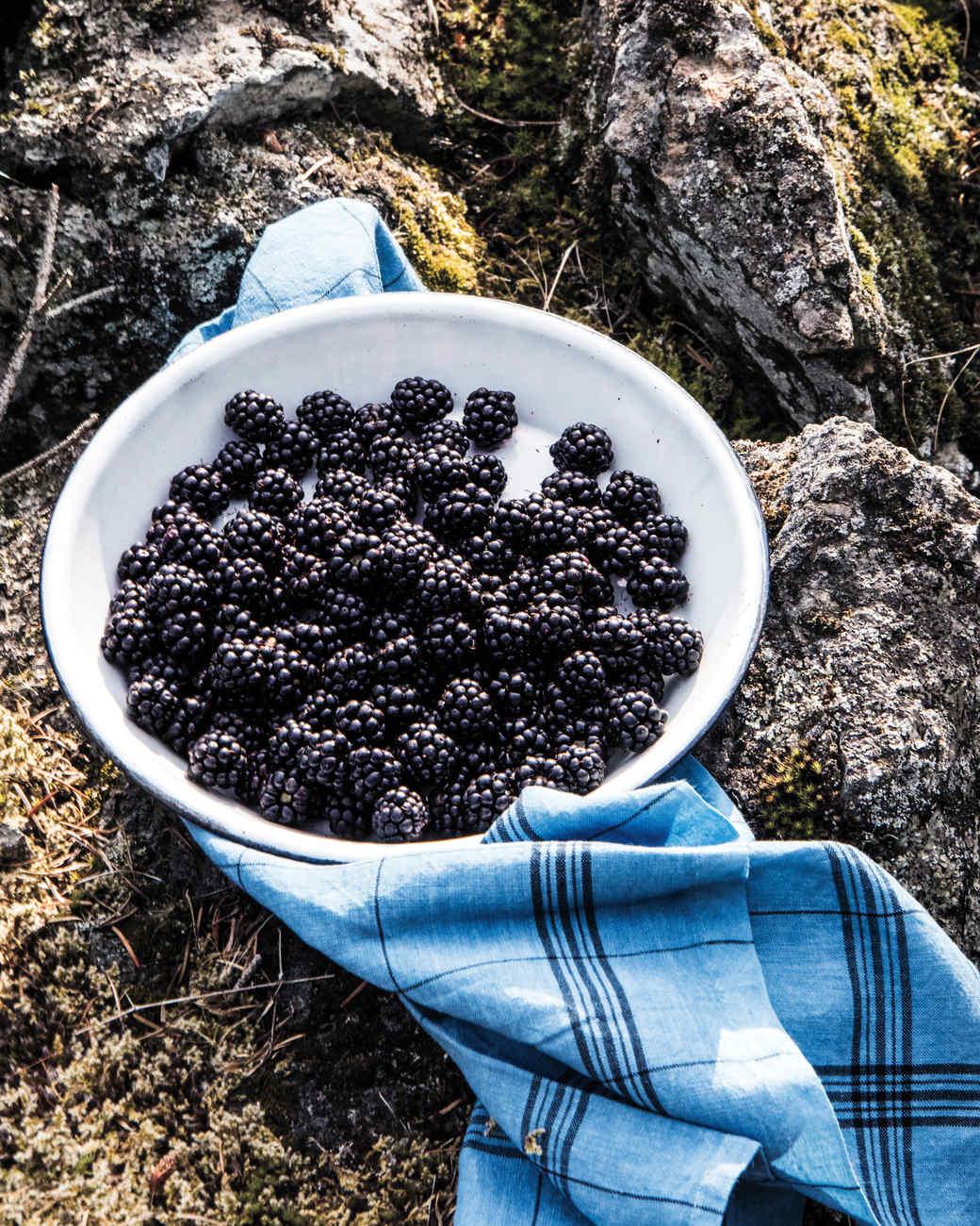 berry-picking-29-d111488.jpg