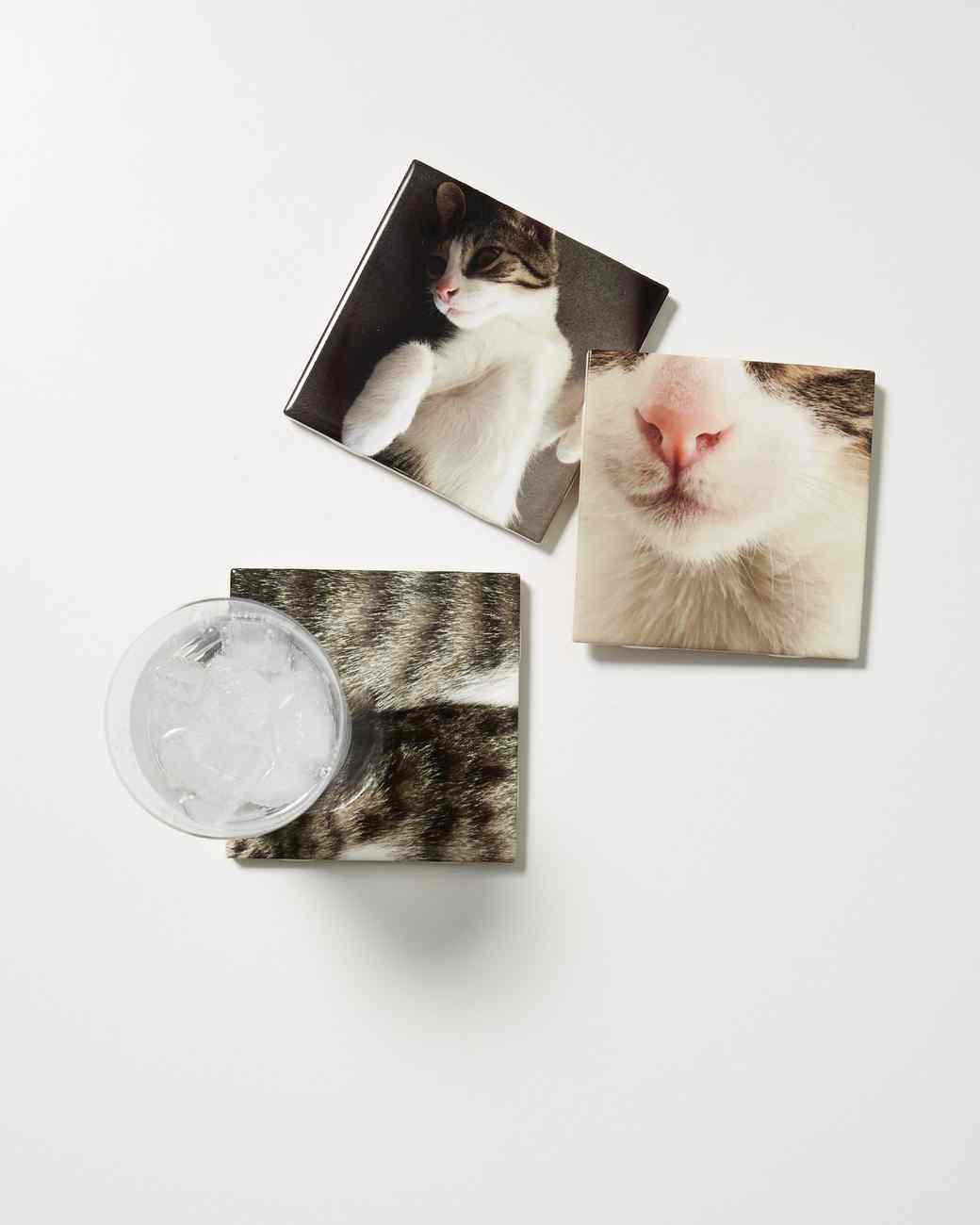 cat-coasters-231-d112972.jpg