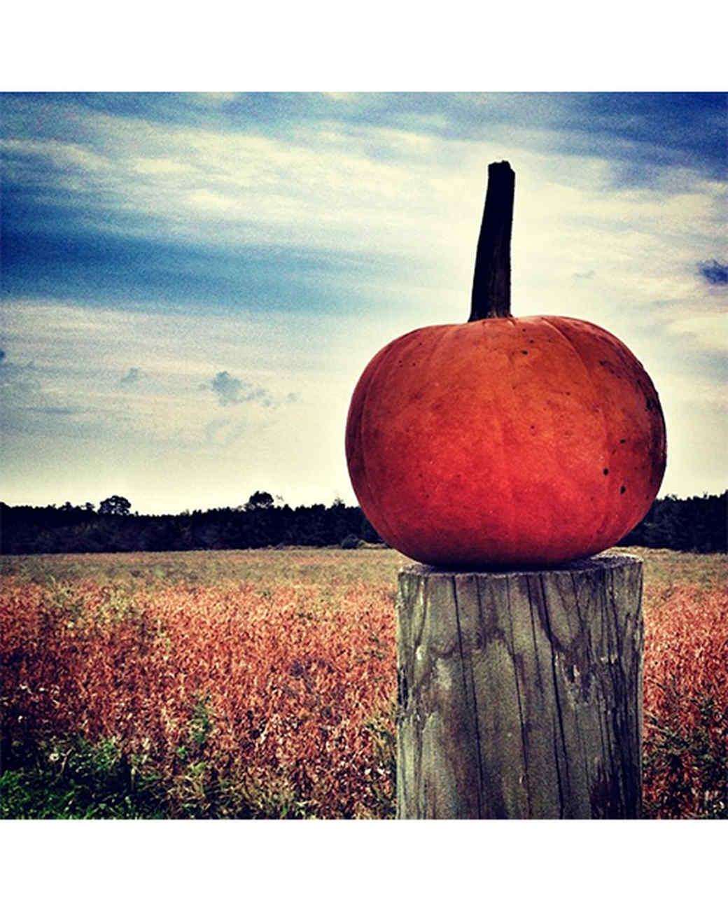 halloween-hunt-ugc-j-ute.jpg