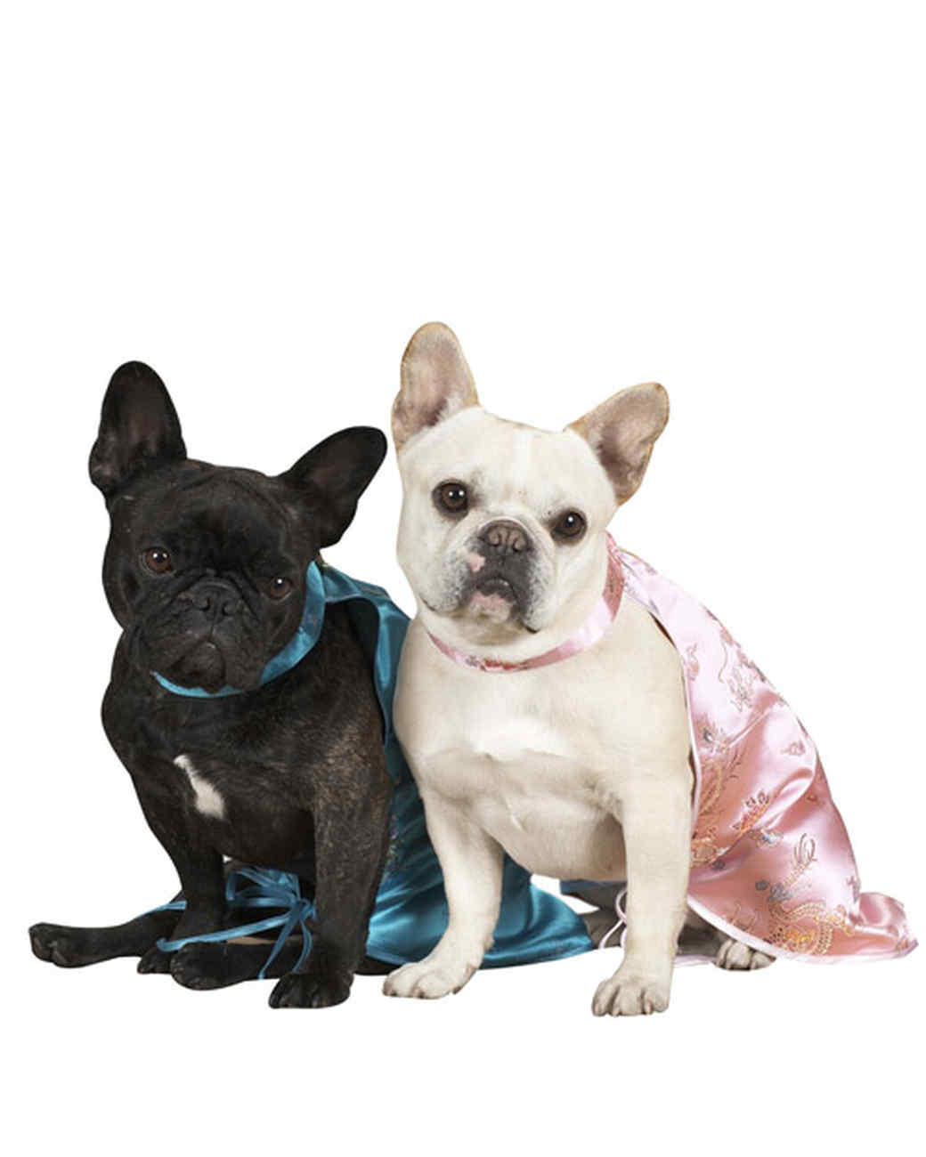 pets_sd104792frenchies08.jpg