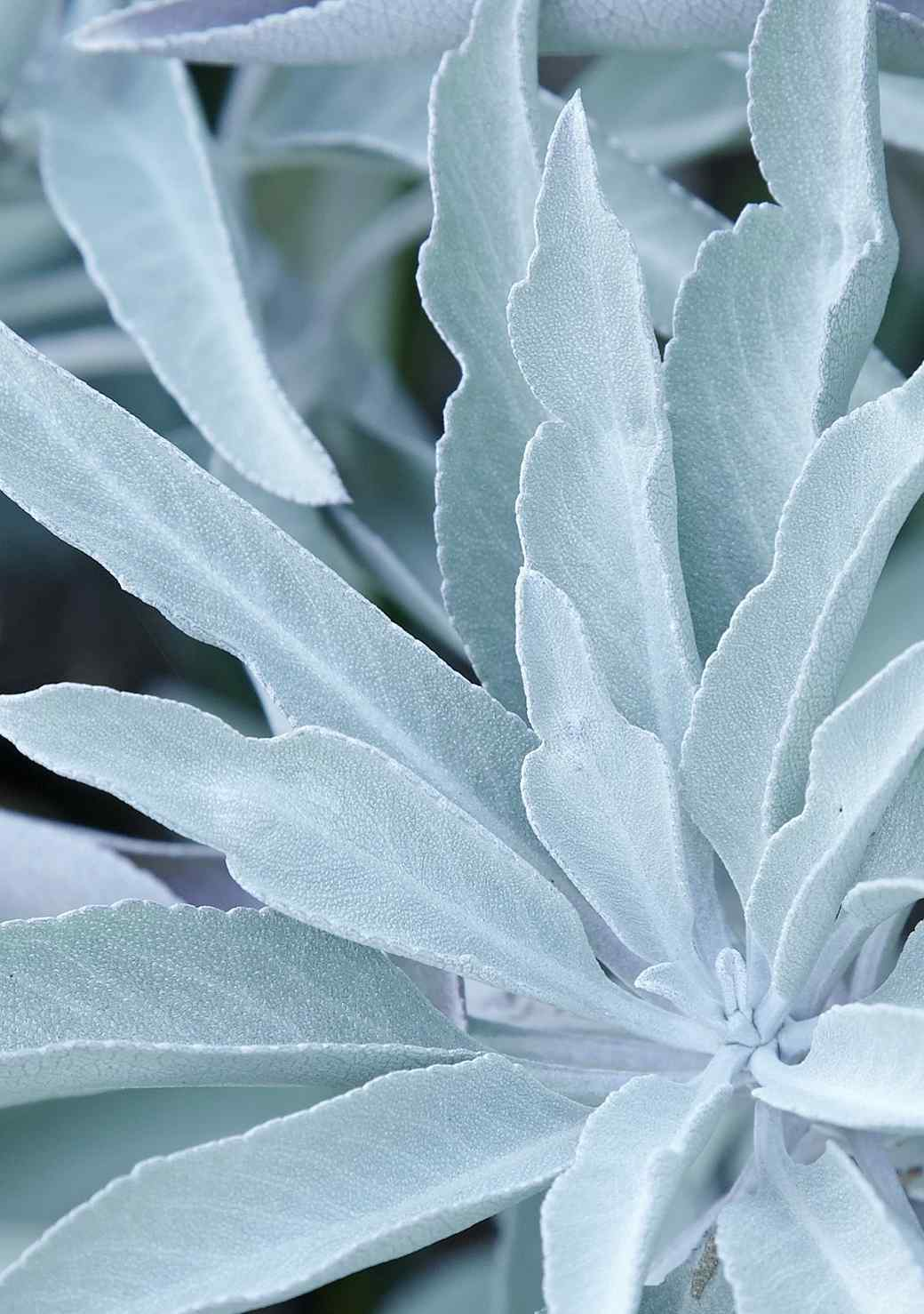 The Nose Knows! Six Fragrant Plants to Grow at Home