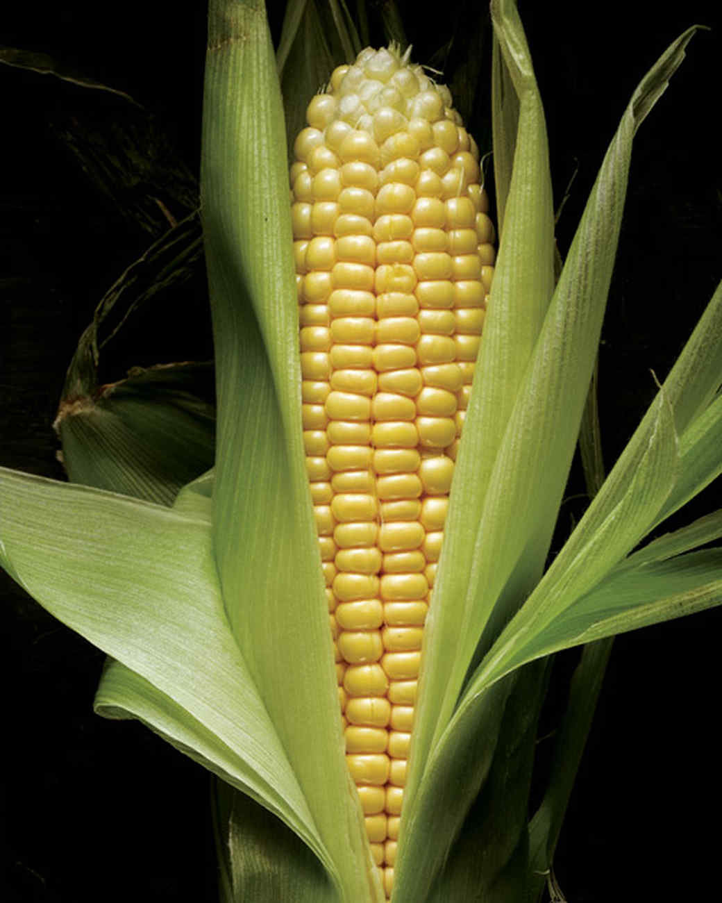 ld101342msl_0705_corn_raw.jpg