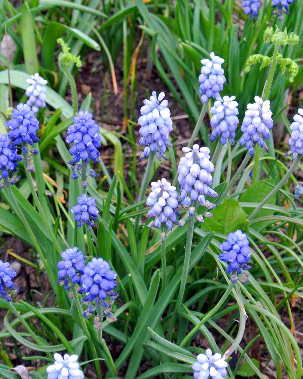 may-flowers-slide-16_0515.jpg