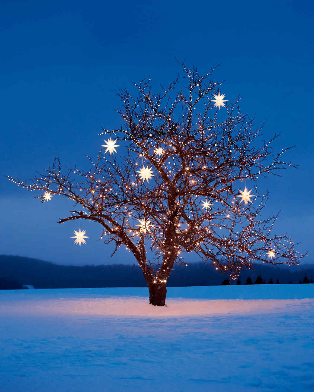 tree-star-lights-md107338.jpg