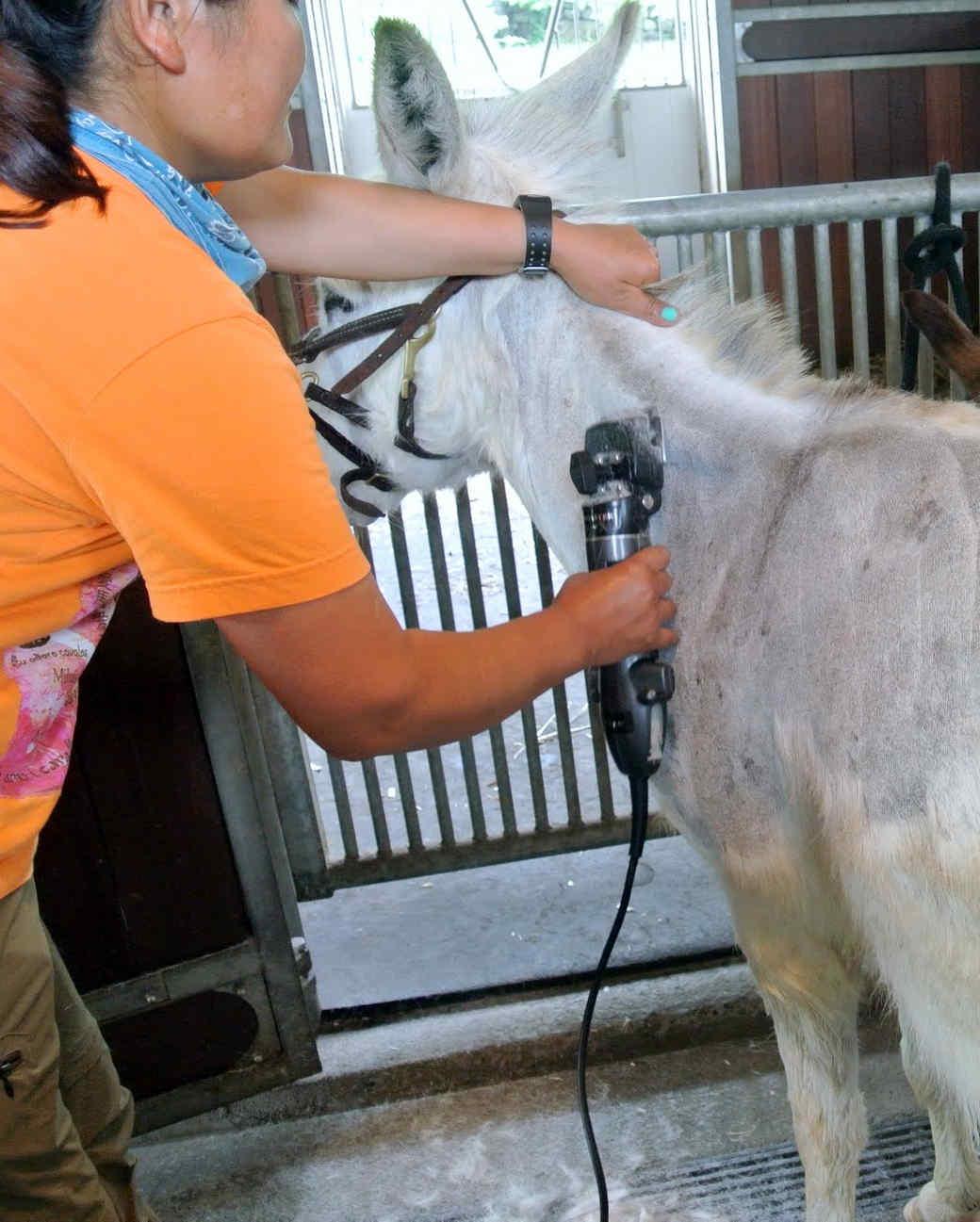 donkeys-summer-haircuts-22.jpg