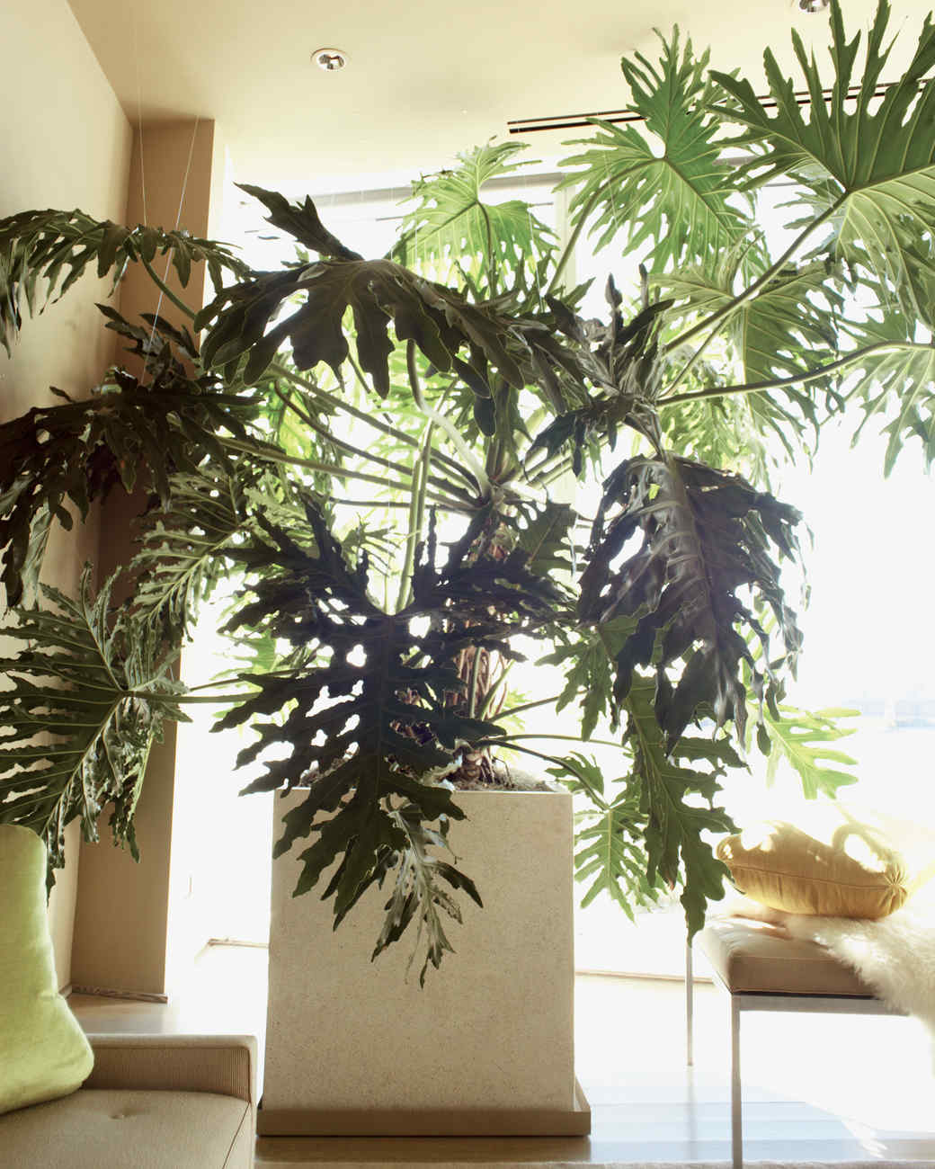 Kevin's Houseplant Ideas And Care Tips