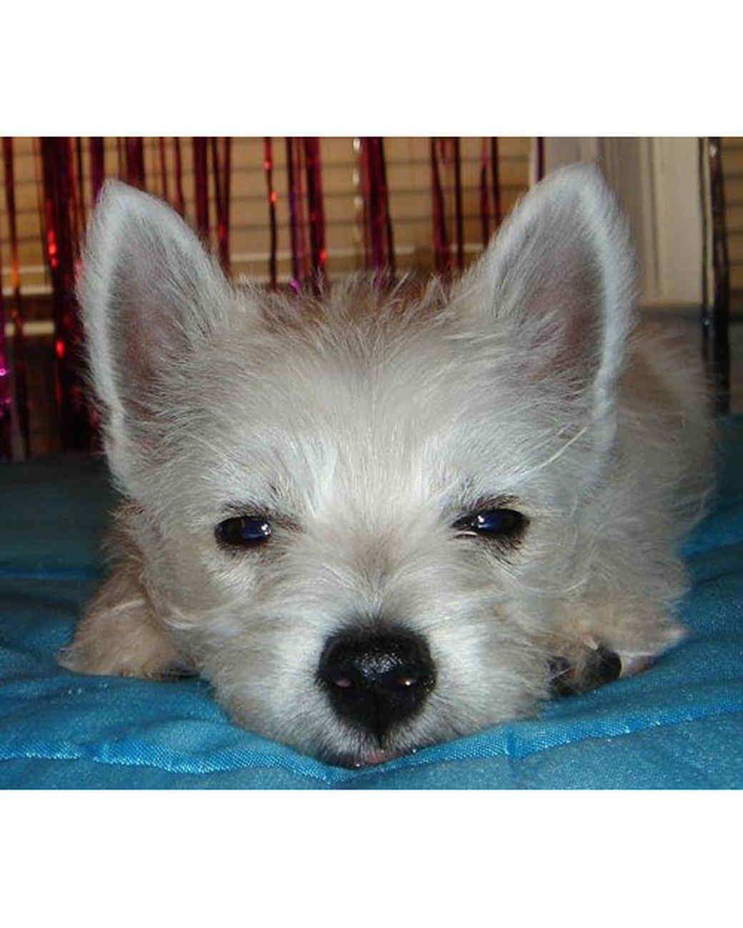 pets_lazy_0909_ori00100749.jpg