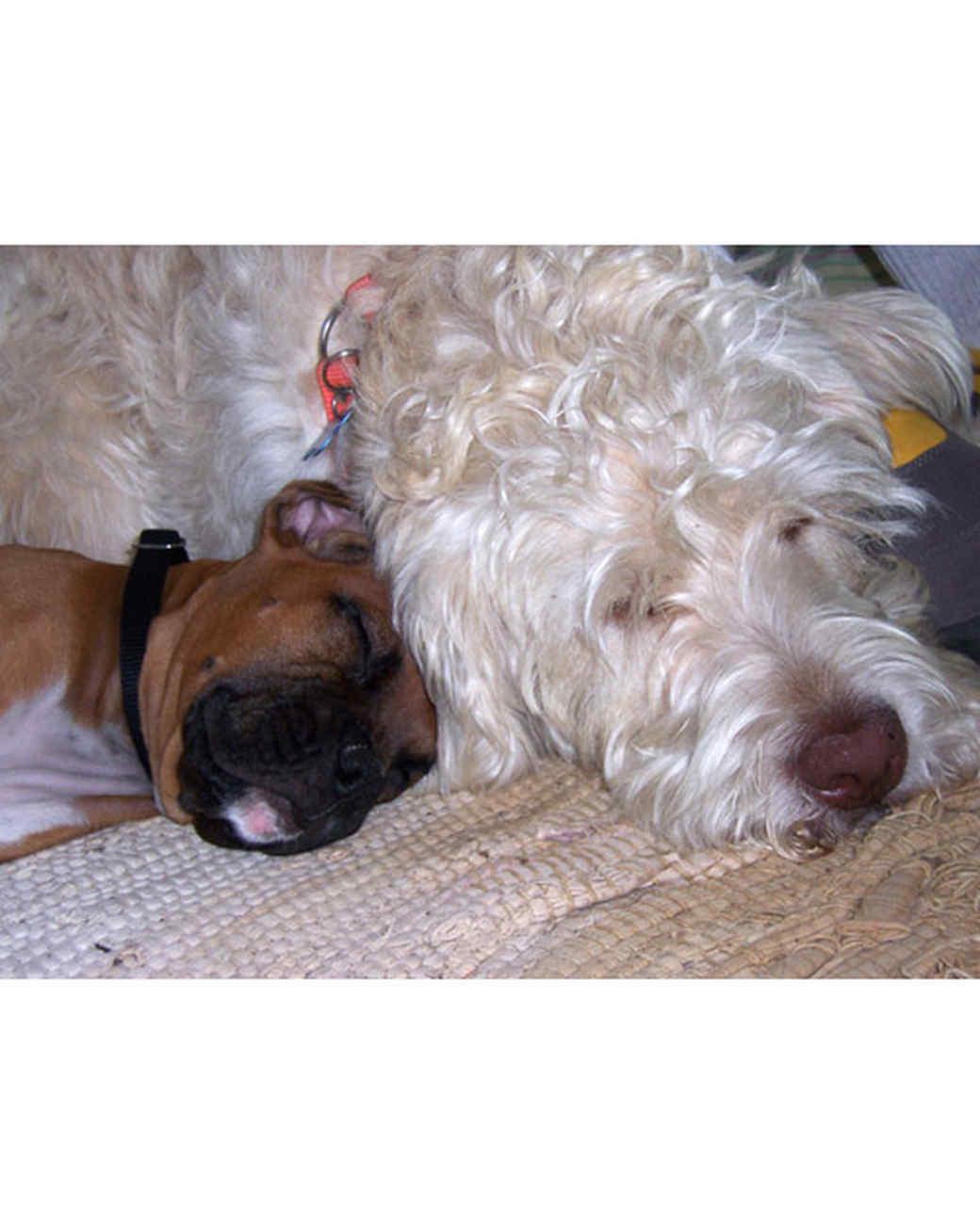 pets_lazy_0909_ori00100882.jpg