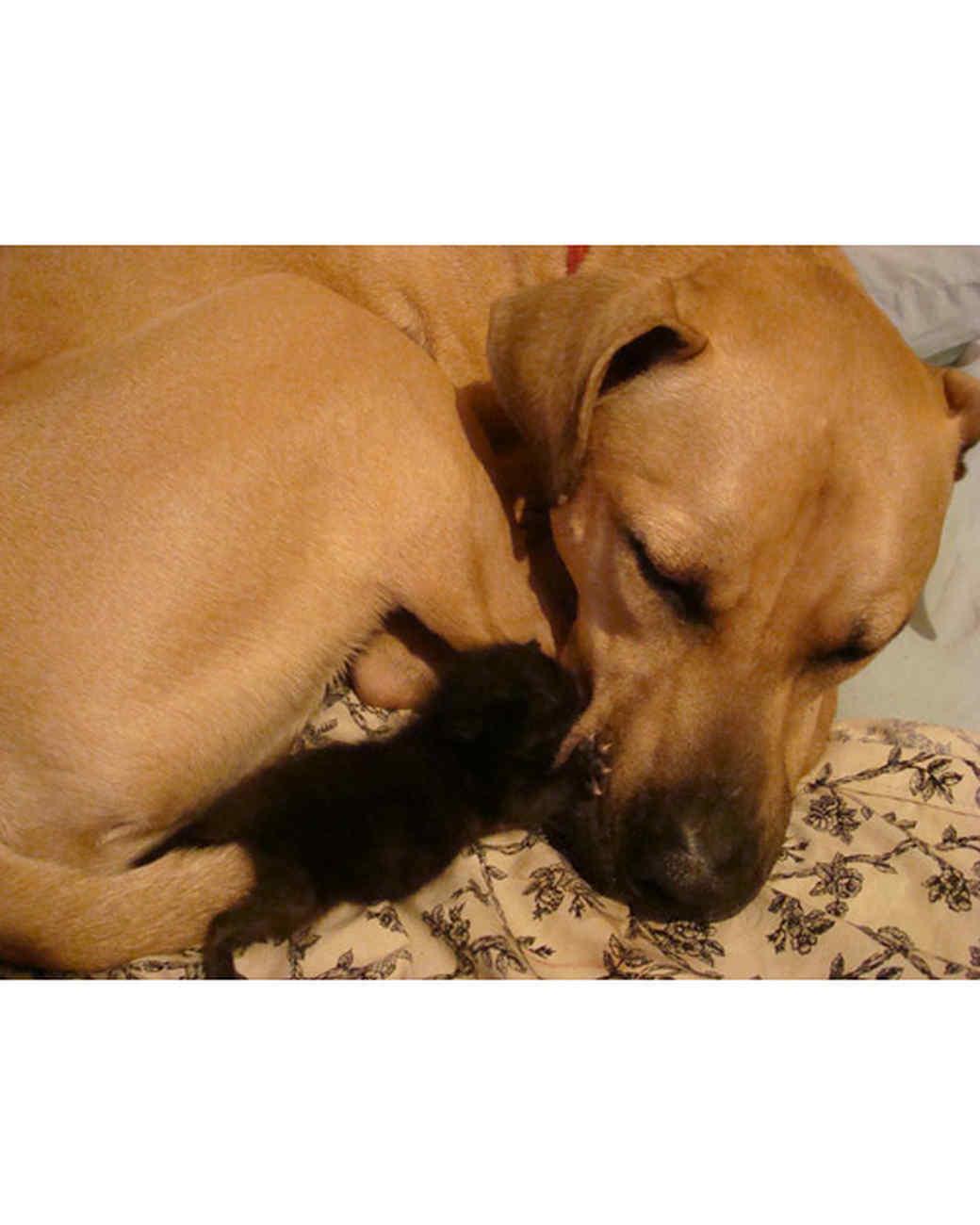 pets_lazy_0909_ori00101051.jpg
