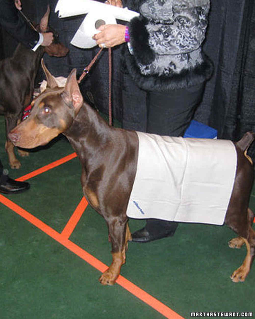 Westminster Dog Show  ...