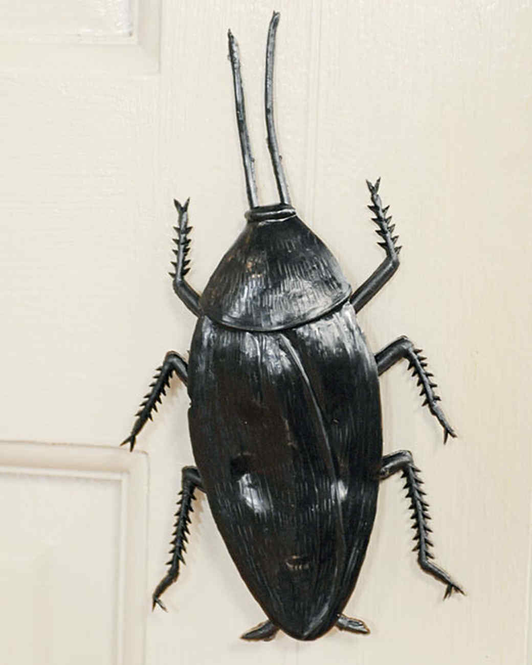 6024_101210_crawling_insect.jpg