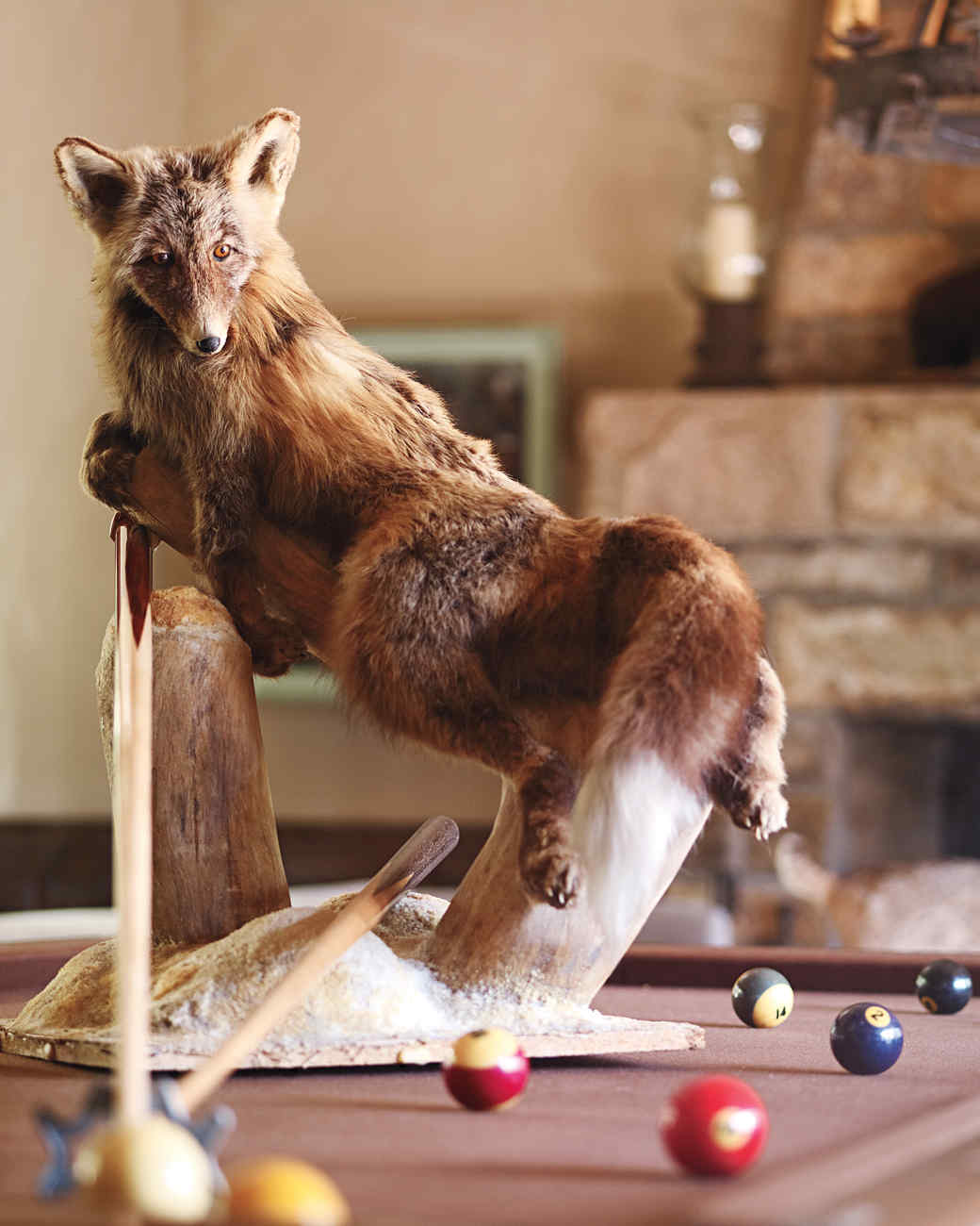 fox-taxidermy-1011mld106418.jpg