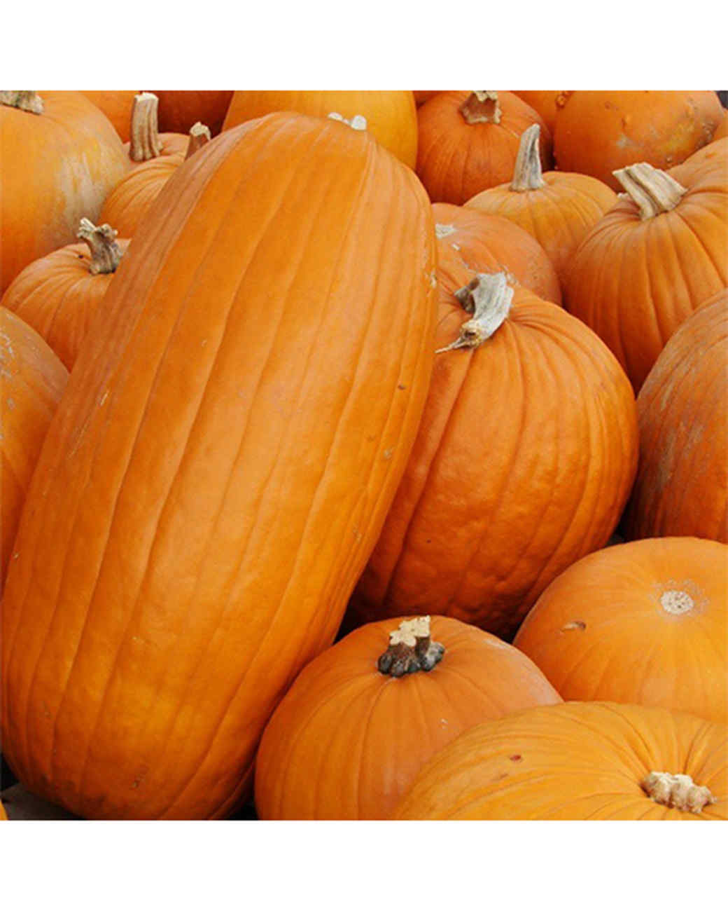 halloween-hunt-ugc-frogybek.jpg