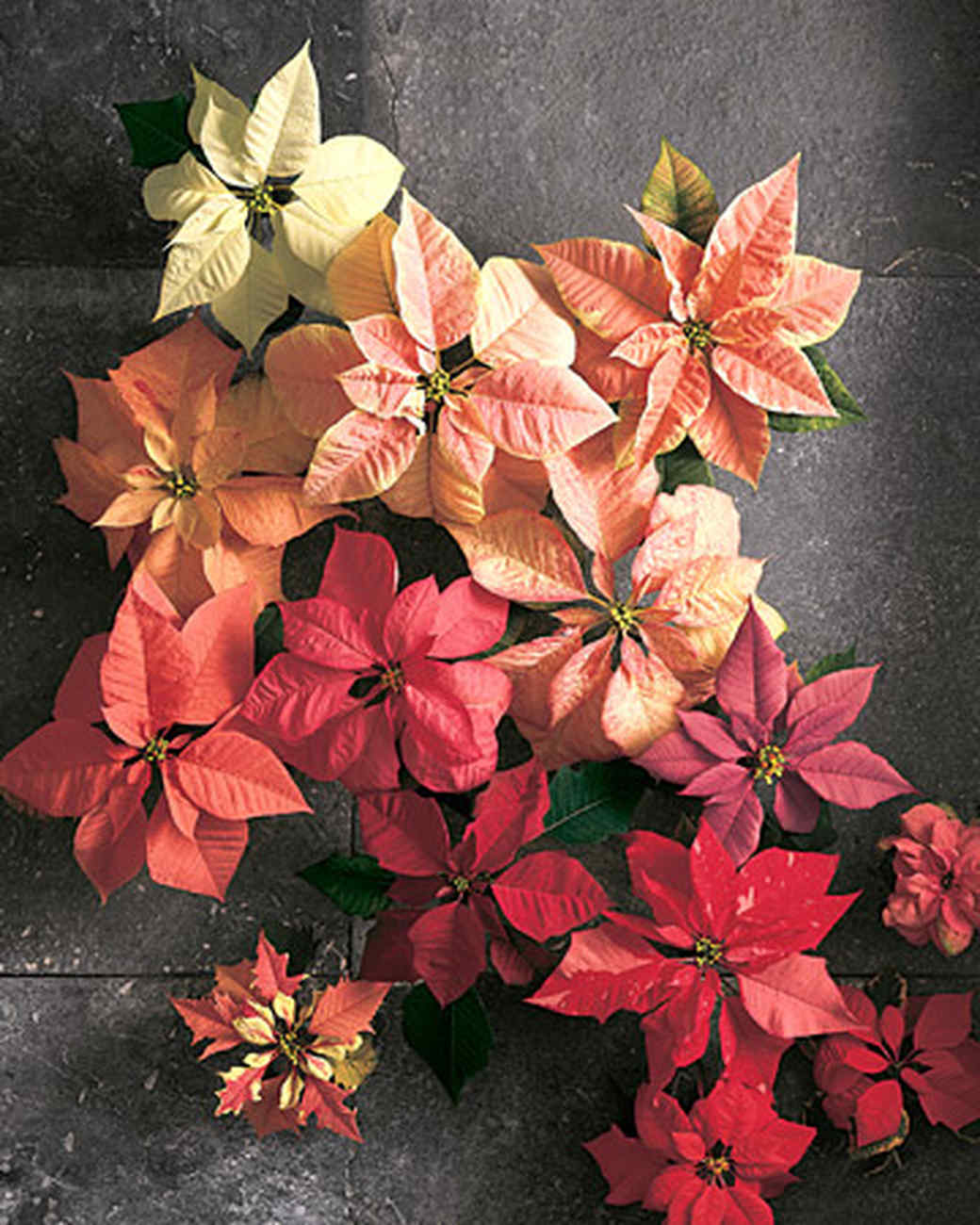 pretty poinsettia projects for a holly jolly holiday
