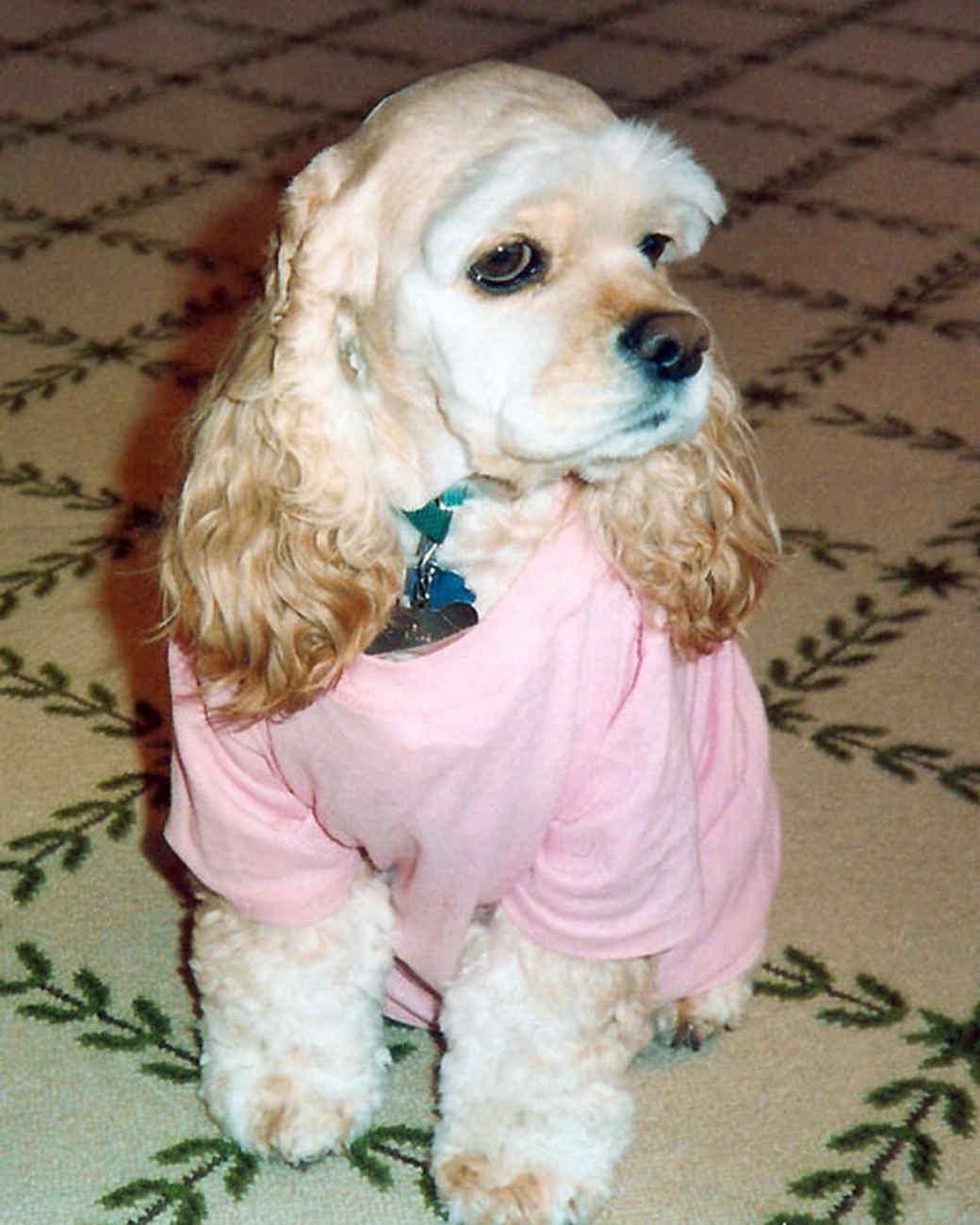 pets_katiepicks10_pinkshirt.jpg