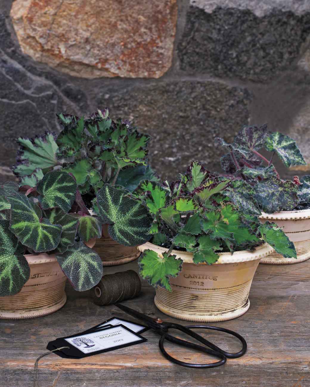 potted-plant-0012-mld109636.jpg