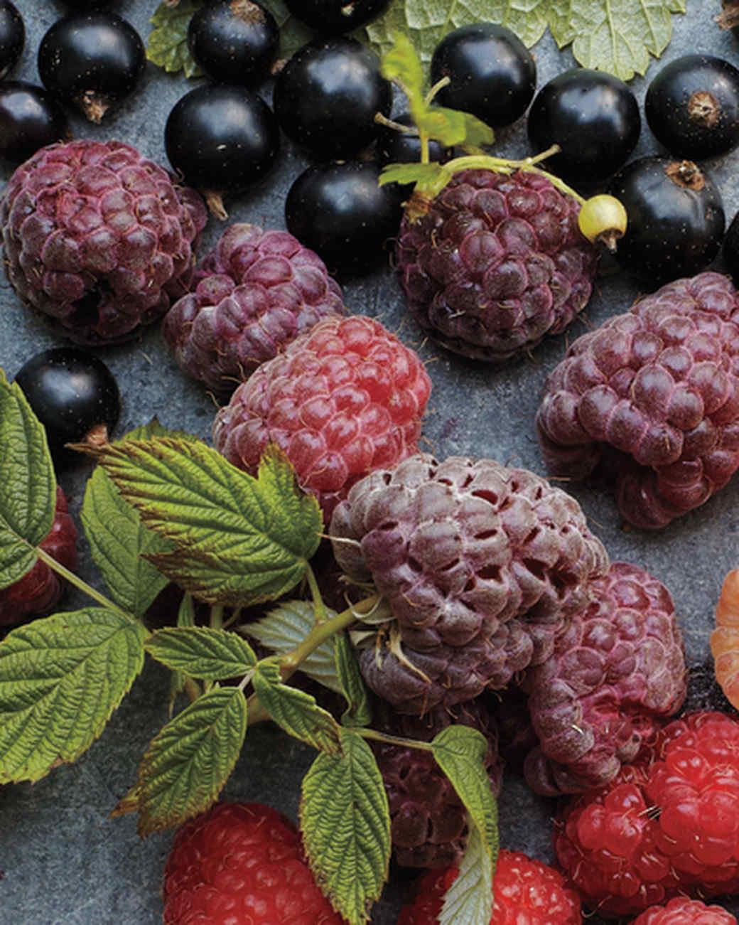royalty-raspberry-mld107637.jpg