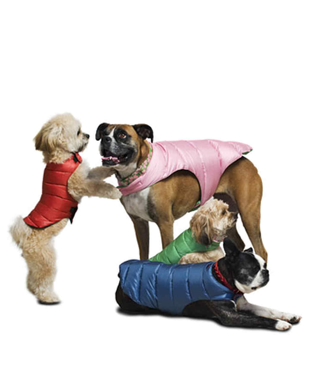 tv_musthaves_dogs_in_puffer.jpg