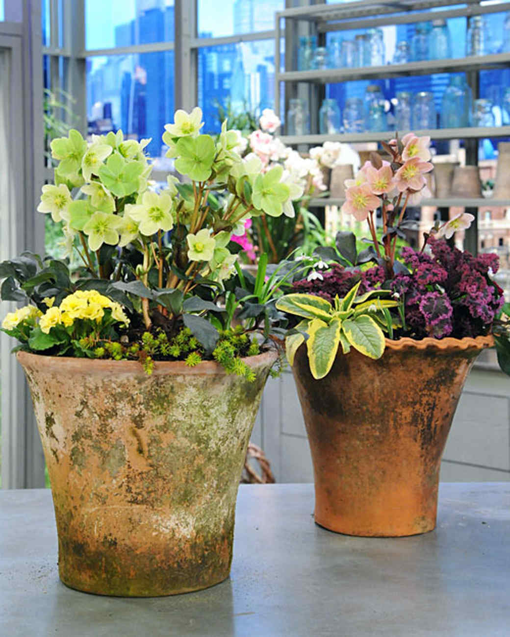 Container Planter: Spring Container Planting & Video