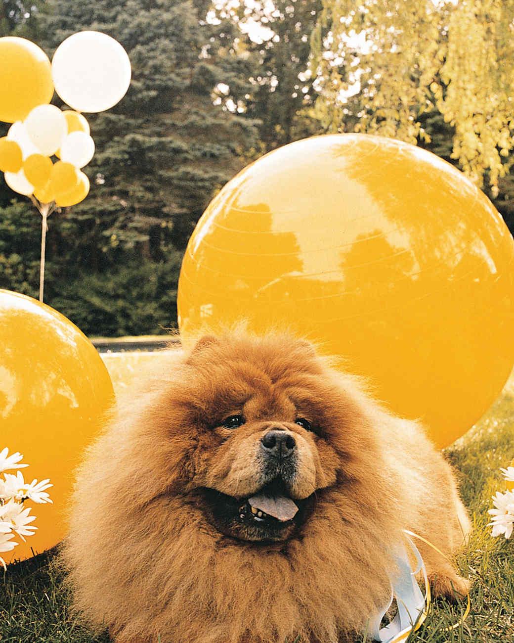 daisys-birthday-ma101007-dog.jpg