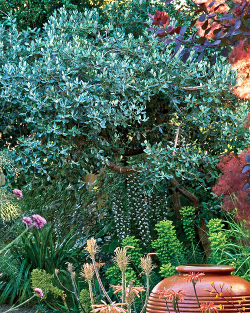 mla10490_0809_pineappl_guava.jpg