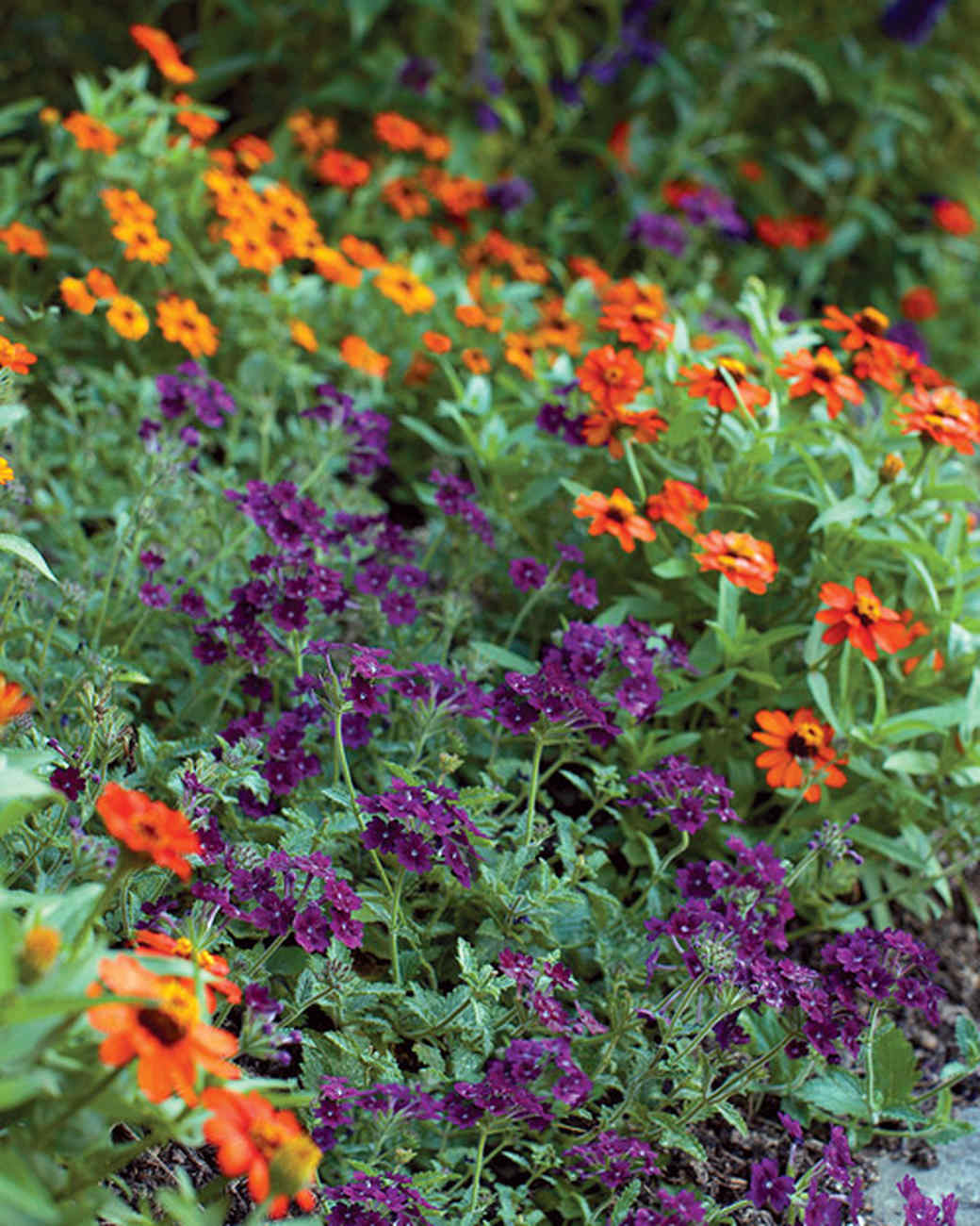 mld104318_0609_orange_purple.jpg