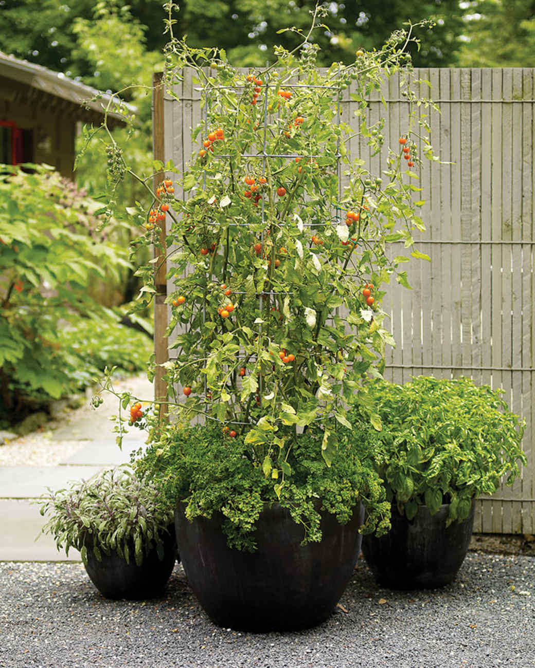 Container garden ideas for any household martha stewart for Container gardening ideas