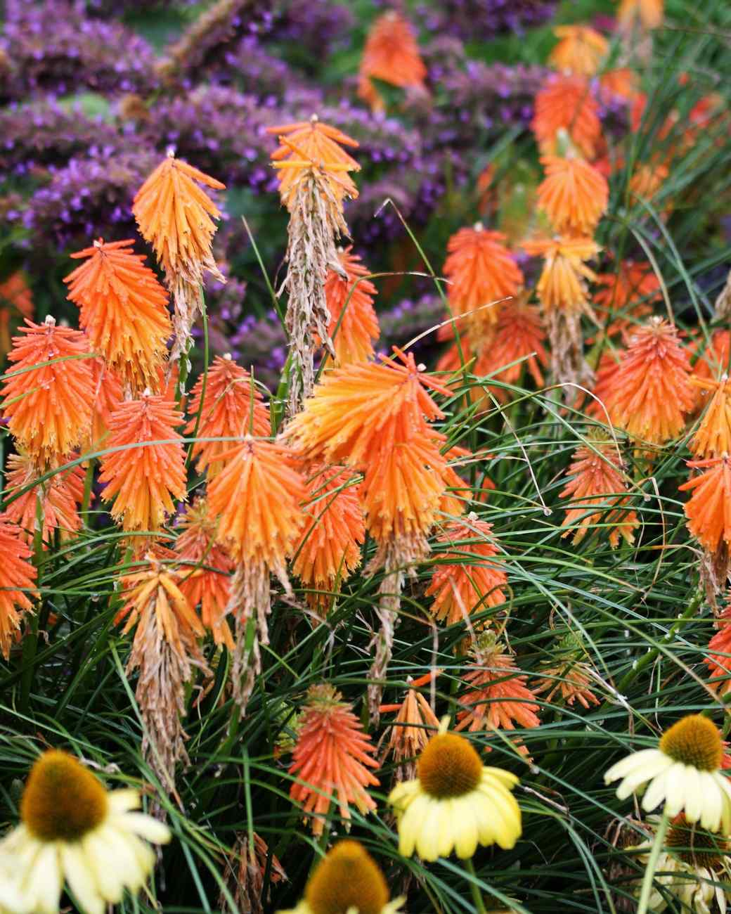 7 Perennial Flowers That Add Color To Your Summer Garden