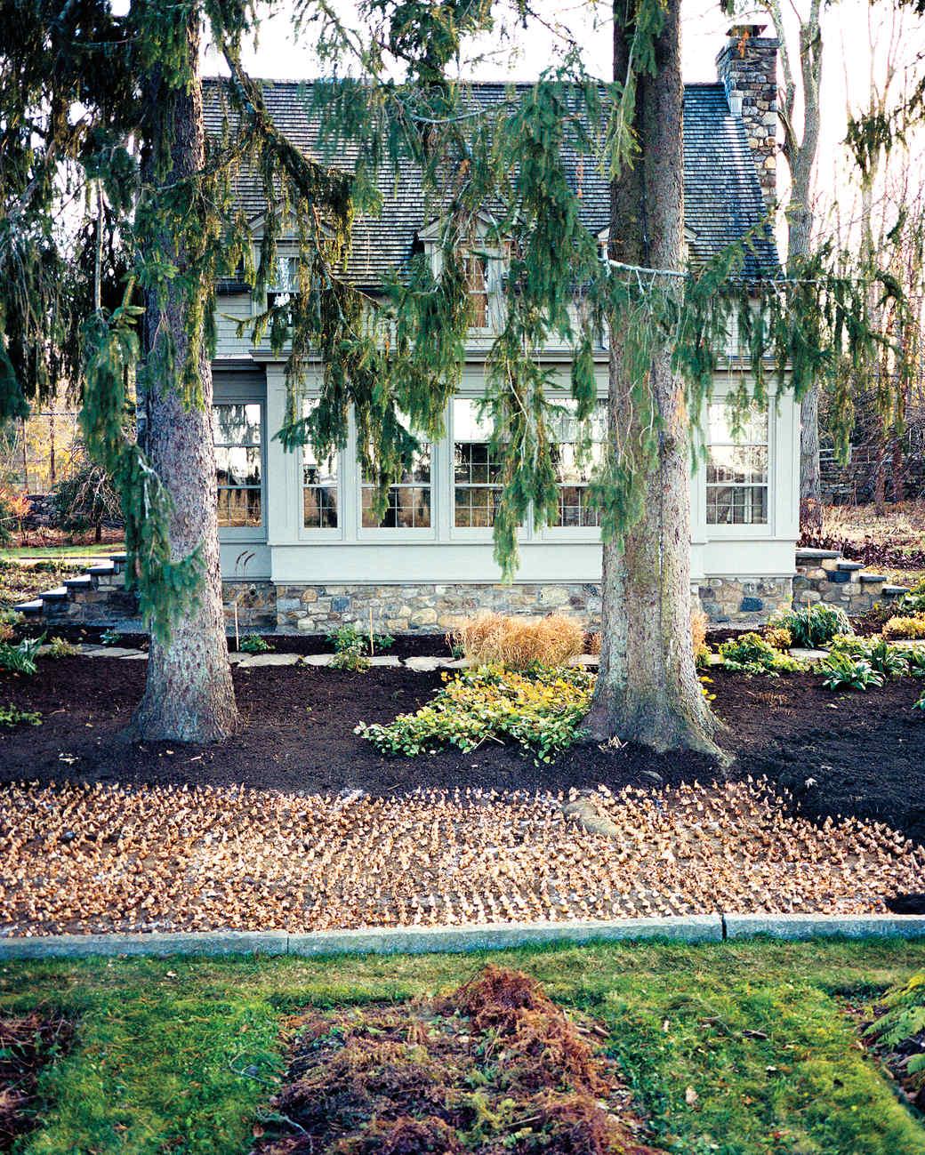 planted-bulbs-09a-8-md109664.jpg