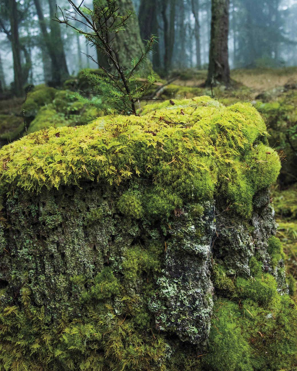 decatur-landscapes-30-d111488.jpg