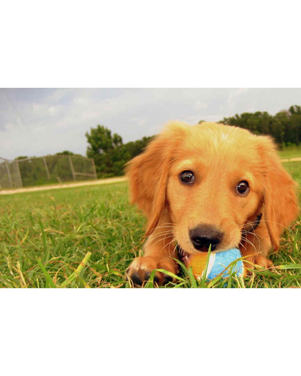 pets_at_play_6342598_11866409.jpg
