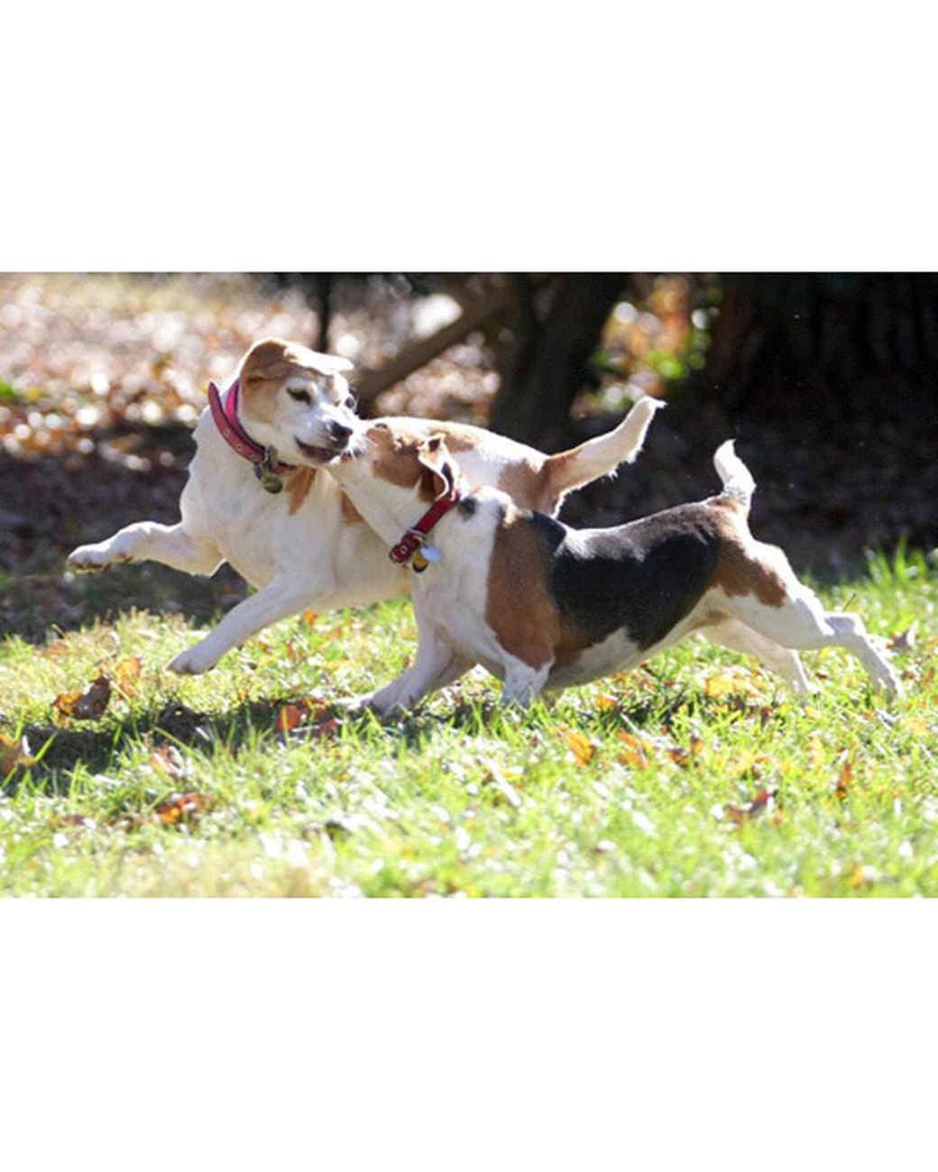 pets_at_play_6432998_15787005.jpg