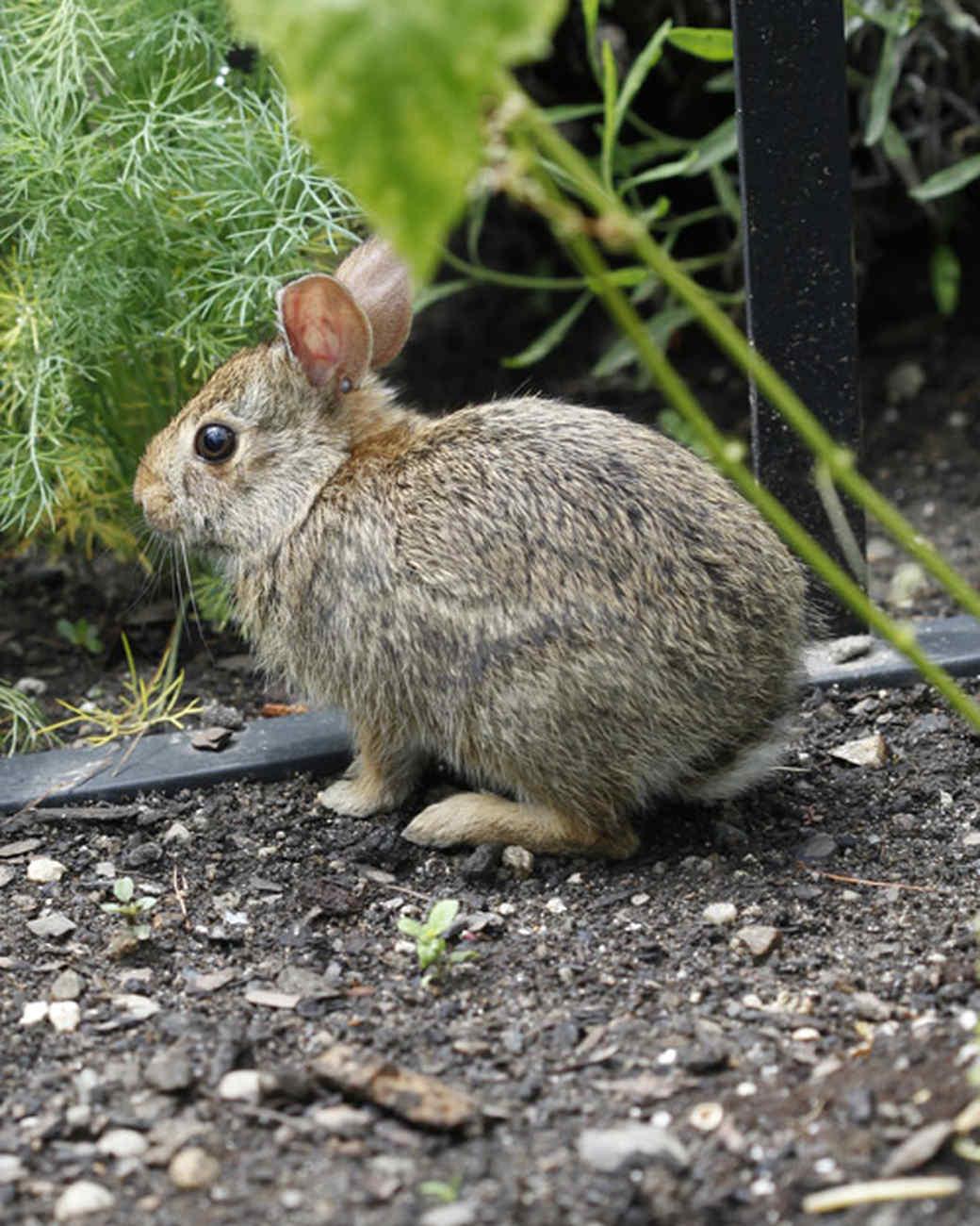 ms_edible_garden_mg_0540_bunny.jpg