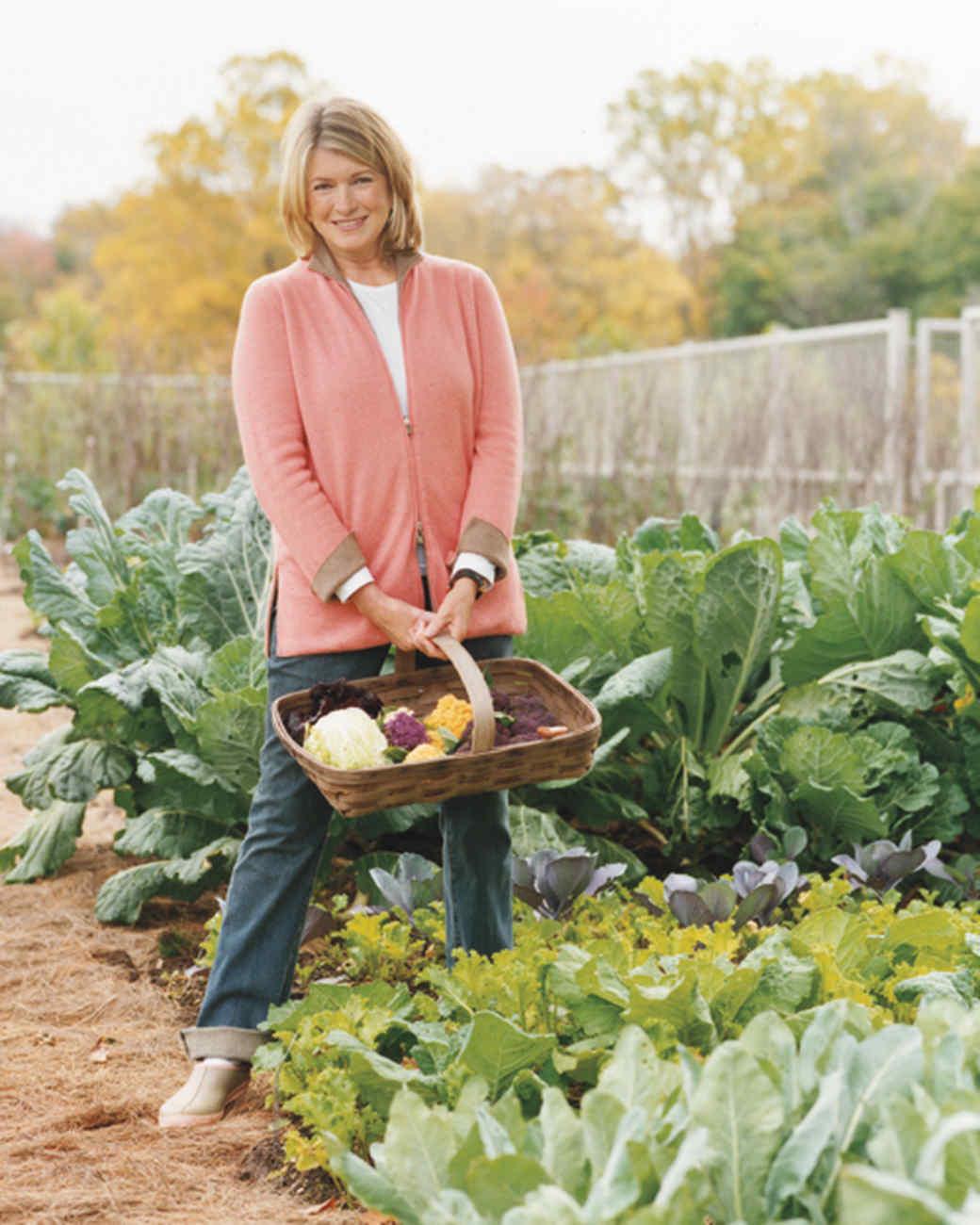 A Tour of Martha's Vegetable Garden