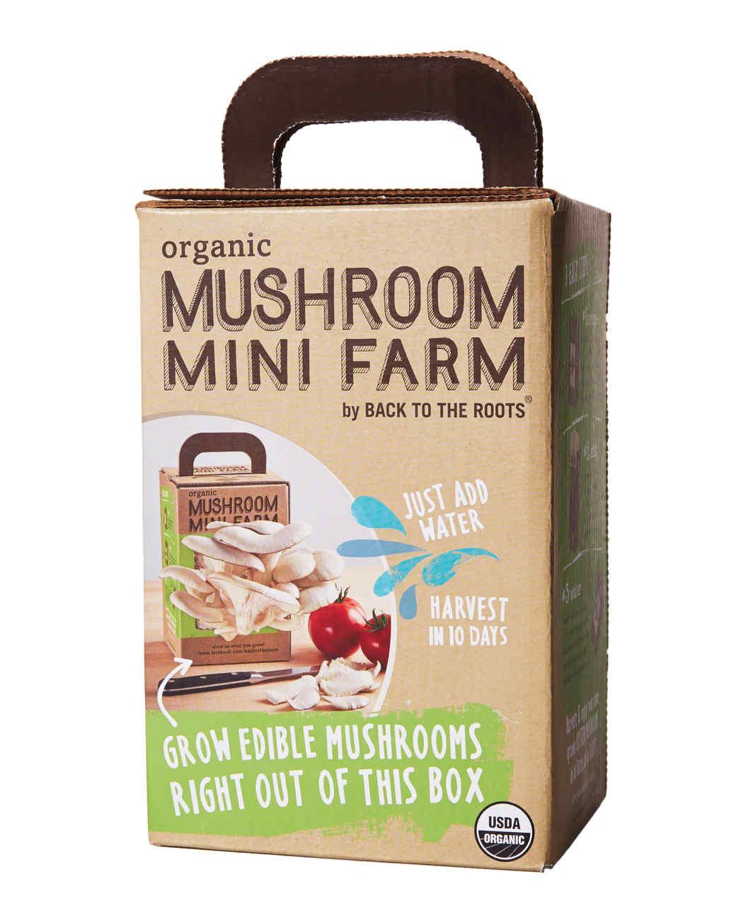 mushroom-mini-farm-156-d111535.jpg