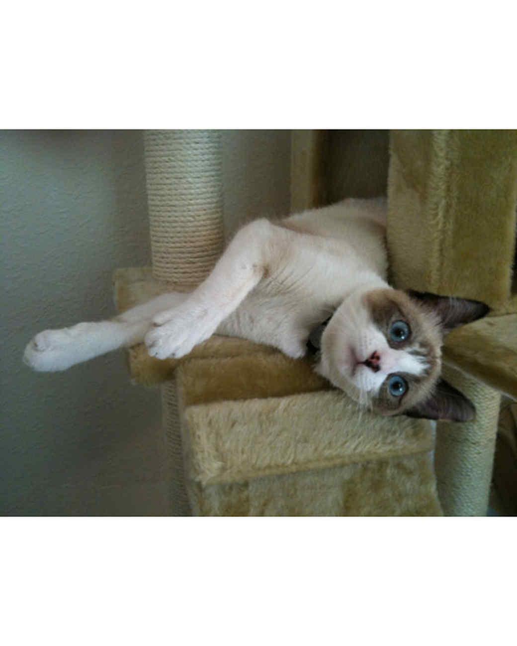 pets_adoption_6899176_18679357.jpg